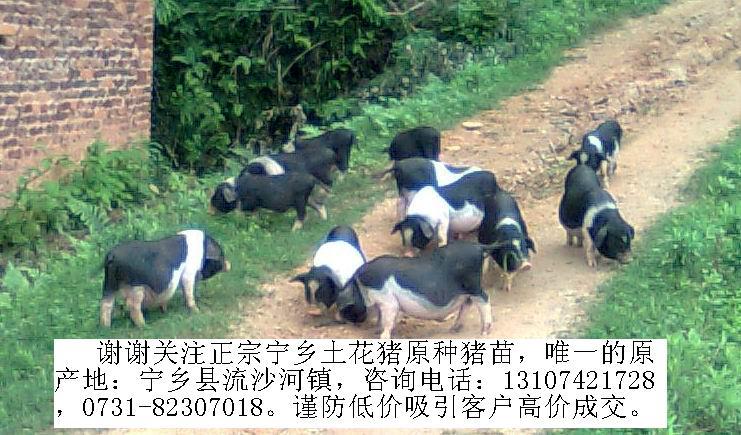动物 羚羊 741_435
