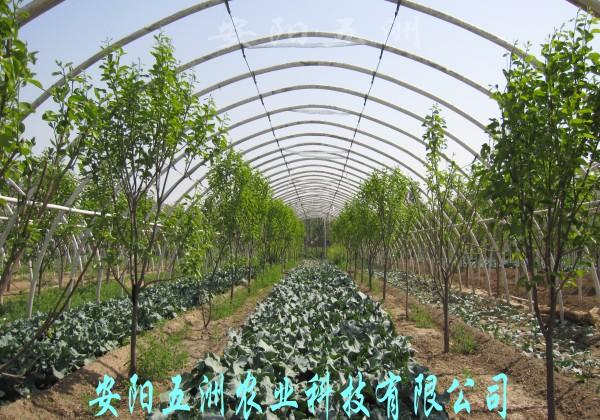 主要从事温室大棚 蔬菜大棚 的研发,设计,制造和安装.