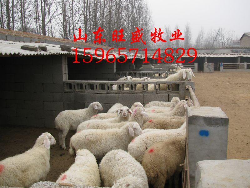 养殖场动物防疫总结