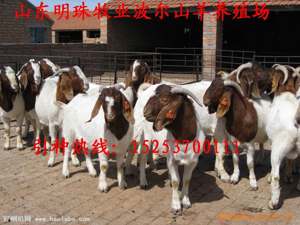 树叶标本制作 山羊