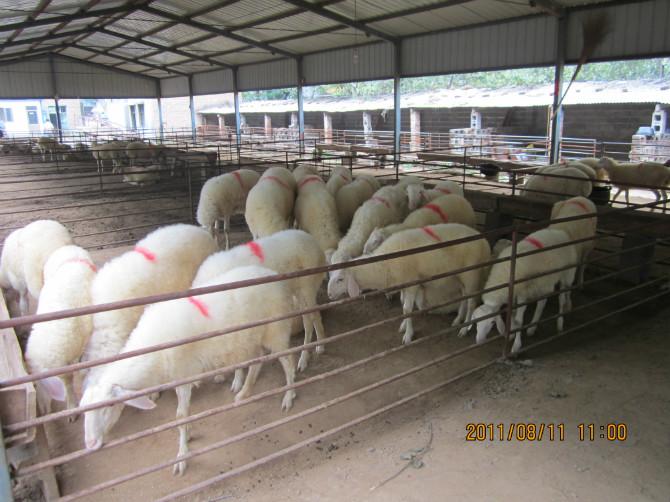 山羊圈养羊舍设计图