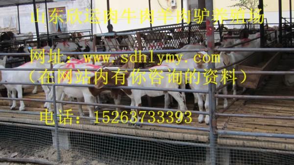 养羊养驴补贴政策规定↓ color] 以上信息由山东欣运牛羊养殖基地自行图片