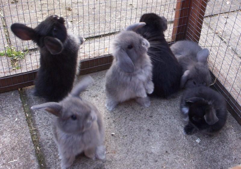 山东最新网上报价獭兔场肉兔场种兔市场价格肉