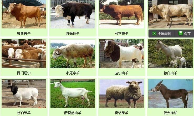 牛羊动物简笔画组合