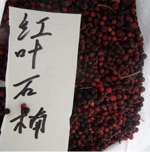 怎么看种子2014_2014年3月兴化红叶石楠种子产地报价恒庆牧草种子供应