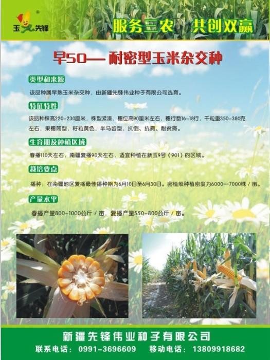新疆玉米种子首选,其他品种欢迎来电