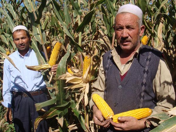 新疆先锋伟业种子有限公司,帮助农户提供玉米种,春耕即将开始