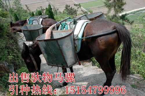 广东省南沙区什么地方卖马骡
