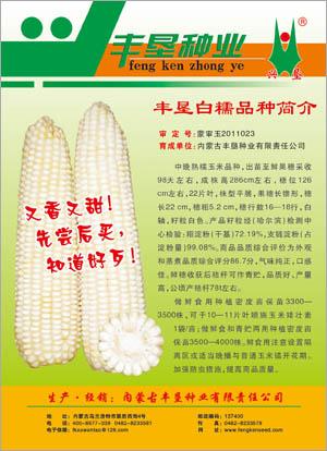 丰垦白糯中晚熟糯玉米种子,内蒙古大型企业批发