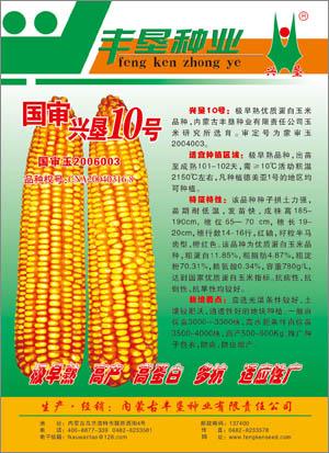 兴垦10号,极早熟优质蛋白玉米种子,内蒙古种业