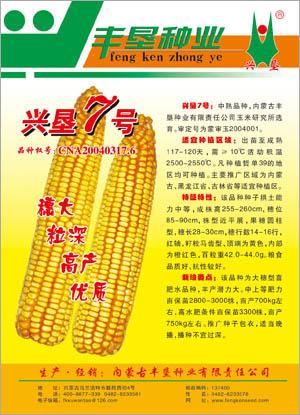 中熟品种,内蒙古丰垦种业,大穗型喜肥水品种,兴垦7号