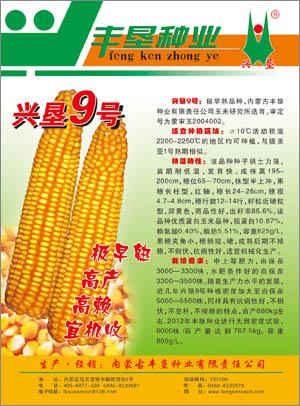 兴垦9号,极早熟品种玉米