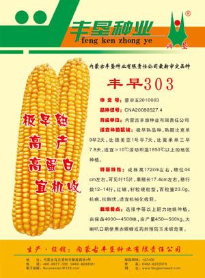 丰早303,极早熟品种,内蒙古玉米种子专业供应基地