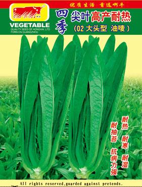 耐热油唛菜,广东广州市种子大型供应基地