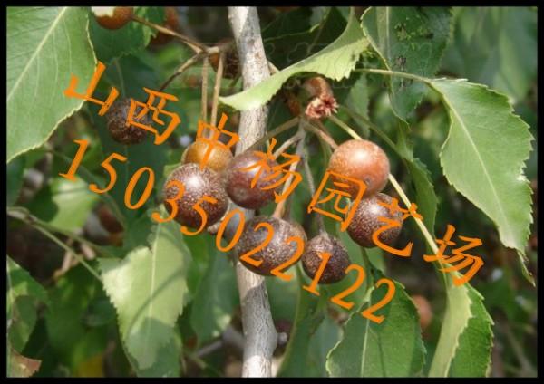 梨树木头花纹图片大全