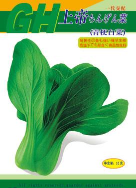 上帝青梗菜,绿叶菜种子,广州产业基地