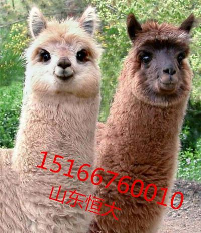 小水塔动物图片