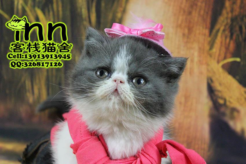 潘集区买猫卖猫猫店宠物猫咪_供应信息_金农网