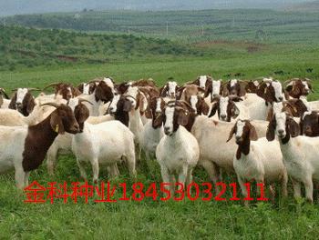 揭西县适合养猪牧草品种有哪些