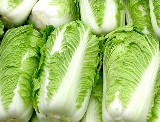 热王子2号,山东白菜种子