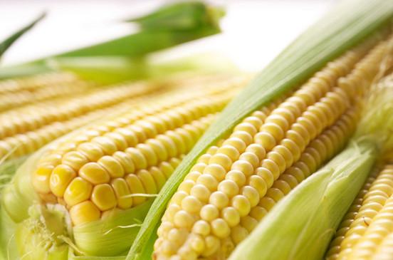 黑龙江哪里卖德美亚2号玉米种子