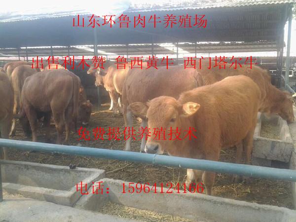 深圳到山东曲阜卖牛羊的飞机时刻表