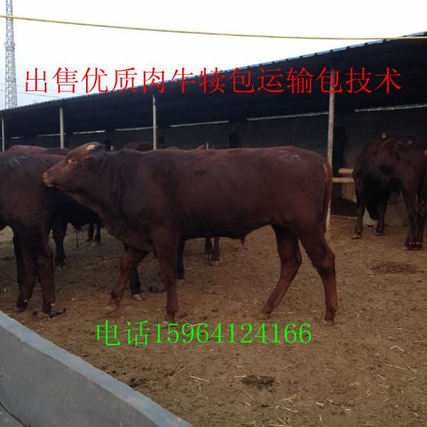 鄂尔多斯到济宁嘉祥去买牛的火车乘车路线